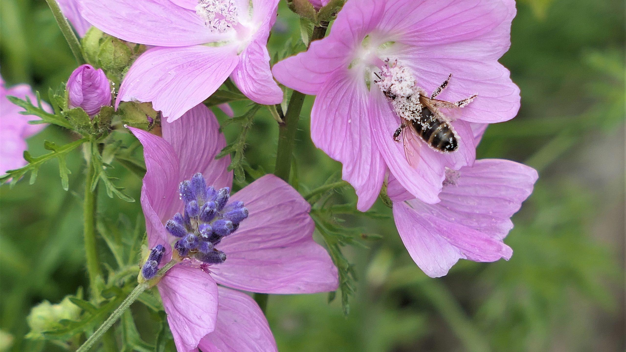 Bee on Pollen