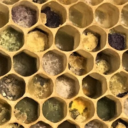 Fresh Pollen packed into cells